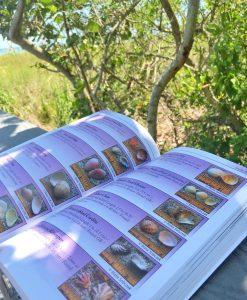 living-sanibel-book-shells